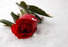О чем молчат женщины к 8 марта - статья Любови Богдановой