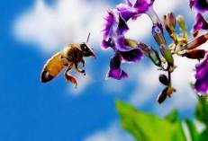 Откровения _Пчеловода_мини