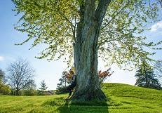 дерево мини