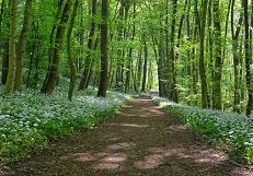 дорога лес мини