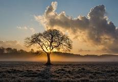 lone-tree mini