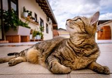 cat mini