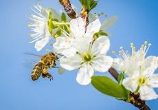 пчеловодство мини